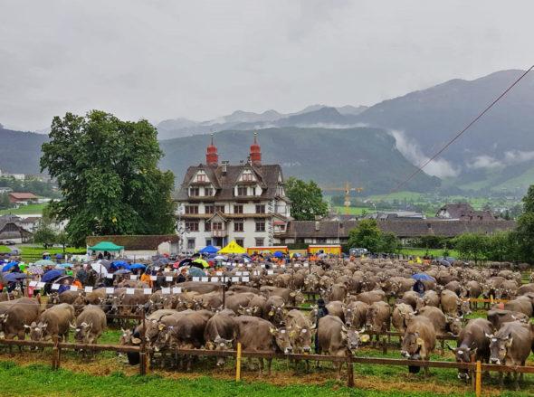 Viehausstellung Schwyz